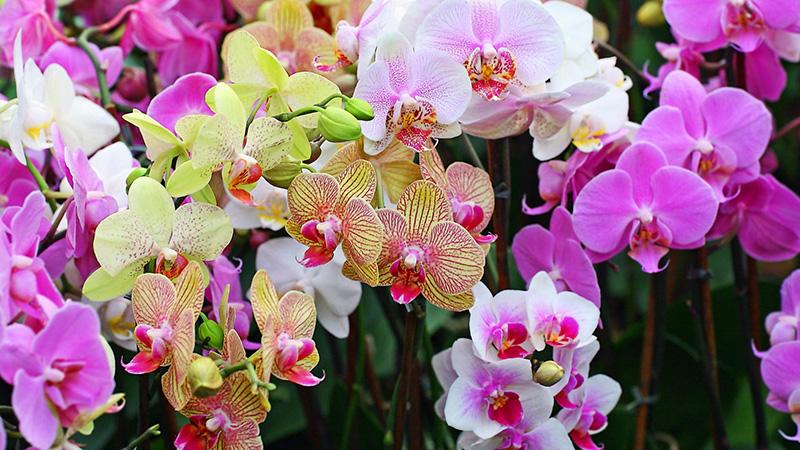 Kết quả hình ảnh cho màu sắc hoa lan hồ điệp