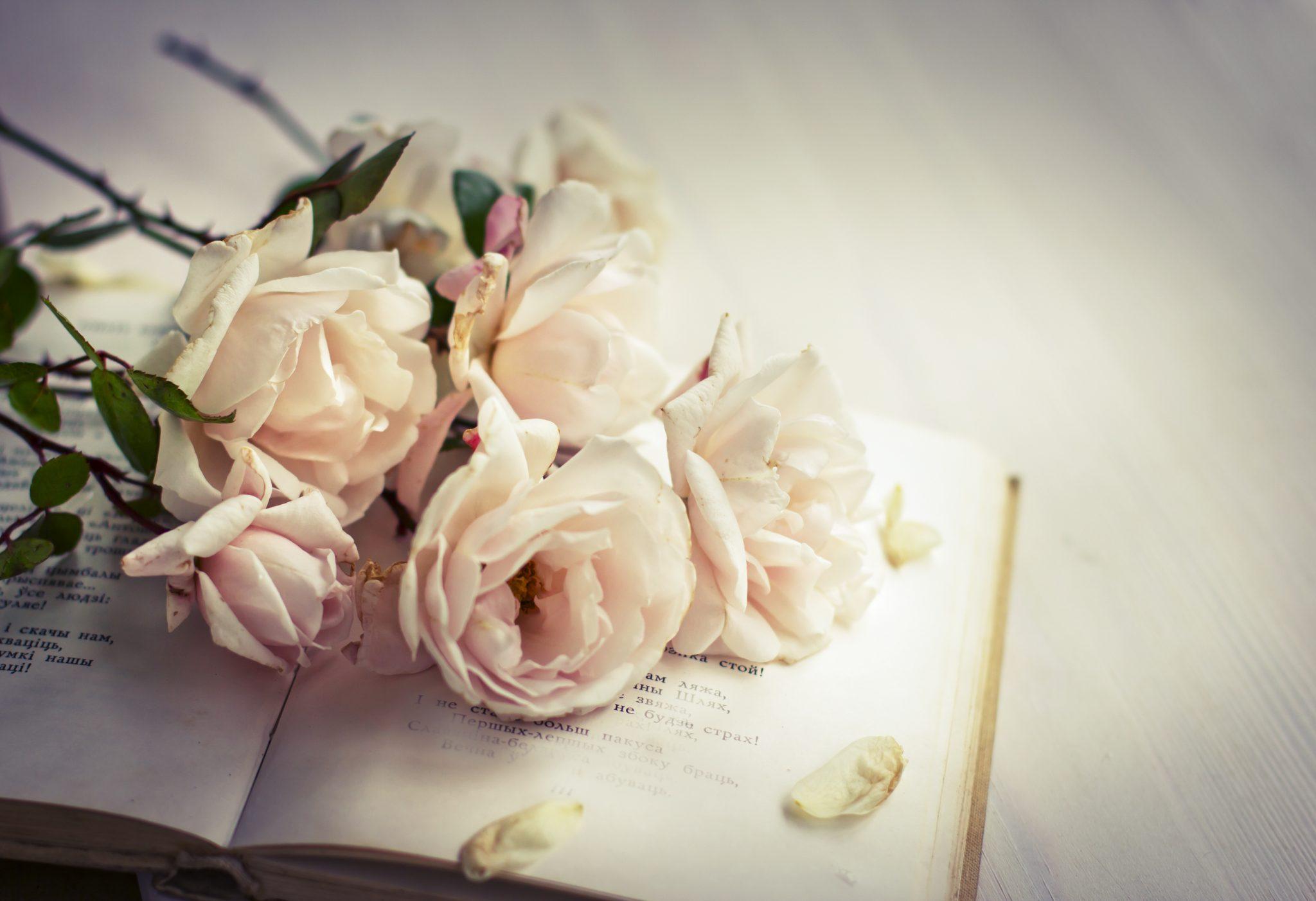 Sách là món quà thể hiện sự tinh tế dành tặng bạn gái
