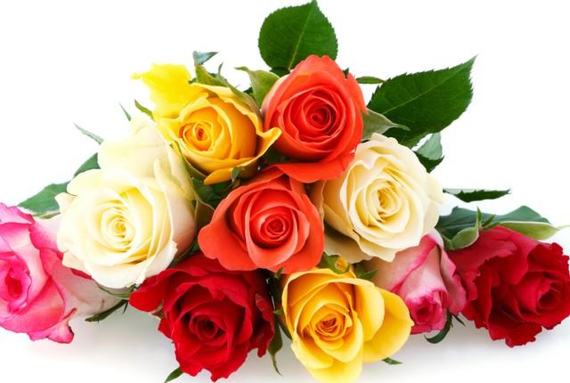 Hoa hồng là loài hoa tượng trưng cho tháng 6