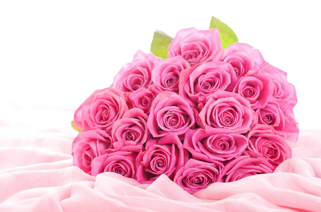 Hoa hồng phấn tặng cô giáo
