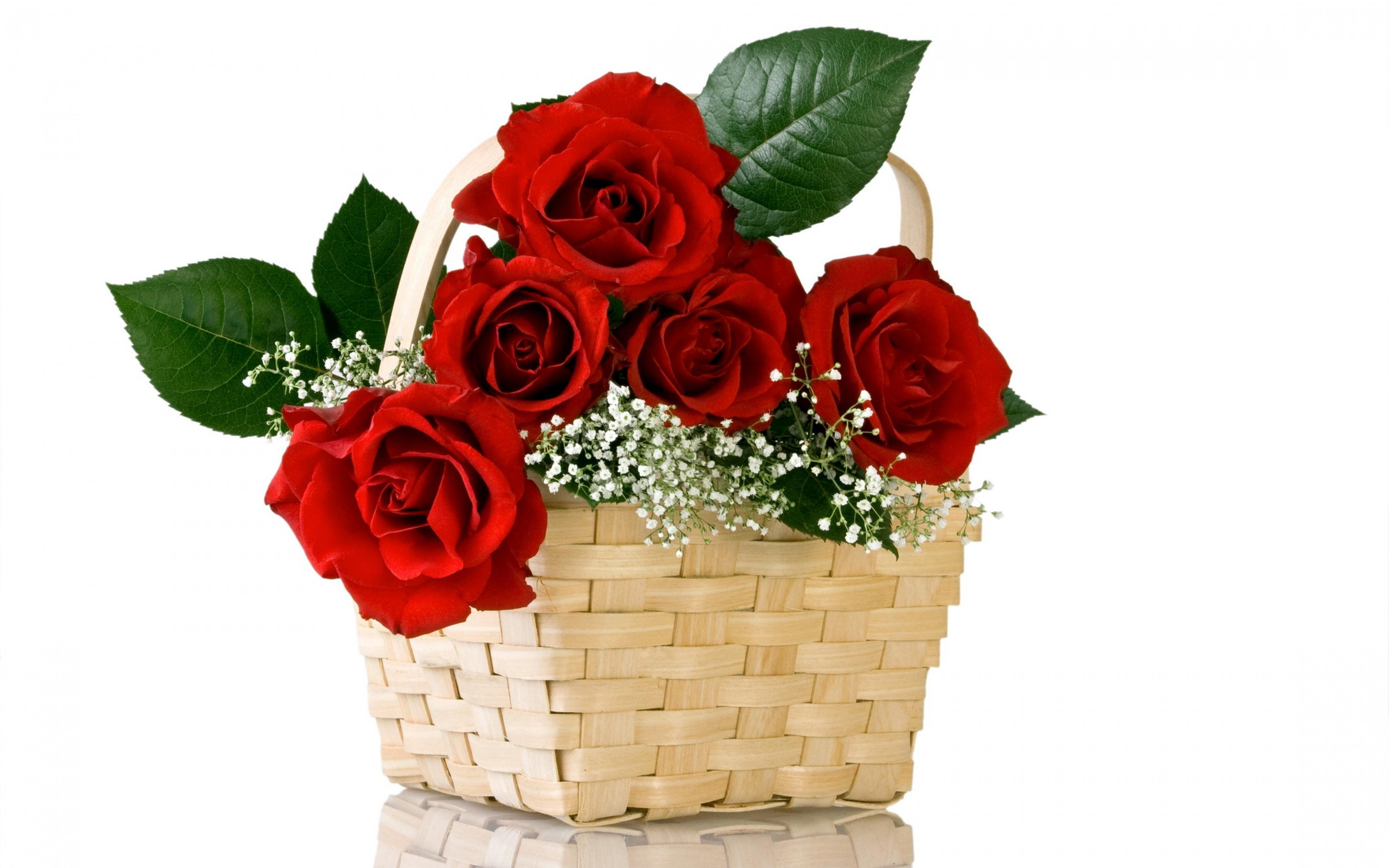 Những hình ảnh hoa hồng đẹp dành tặng thầy cô giáo nhân ngày 20/11