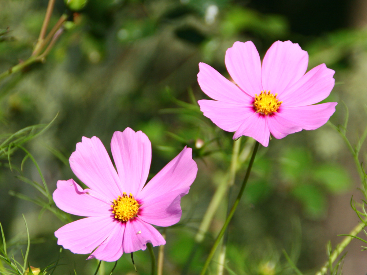 Kết quả hình ảnh cho hoa