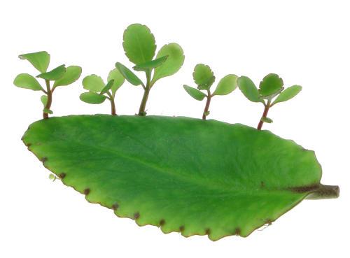 Ý nghĩa cây sống đời