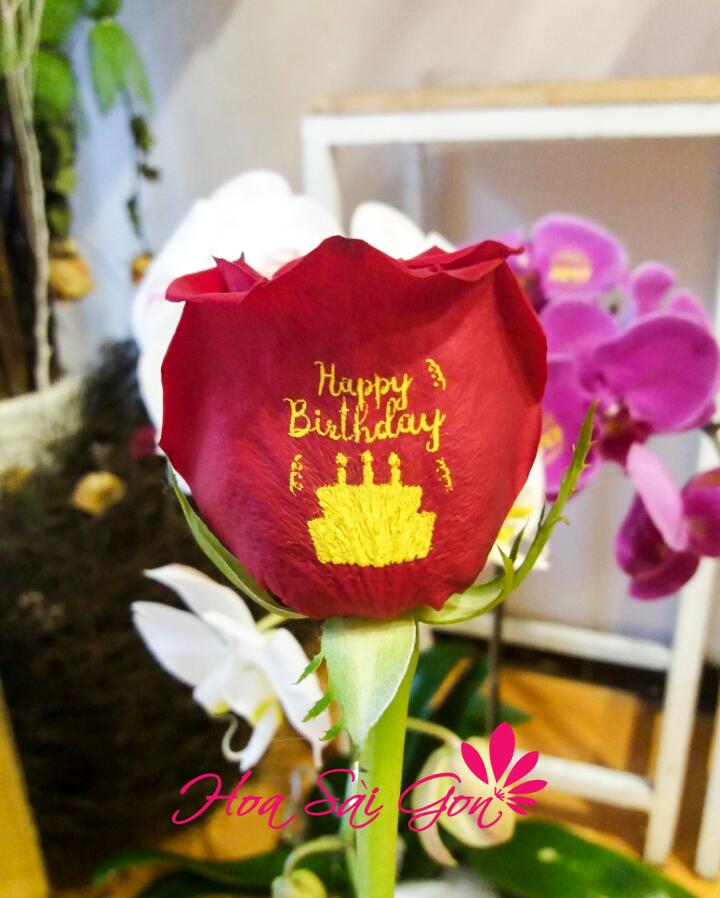 Mẫu hoa sinh nhật là hoa hồng biết nói