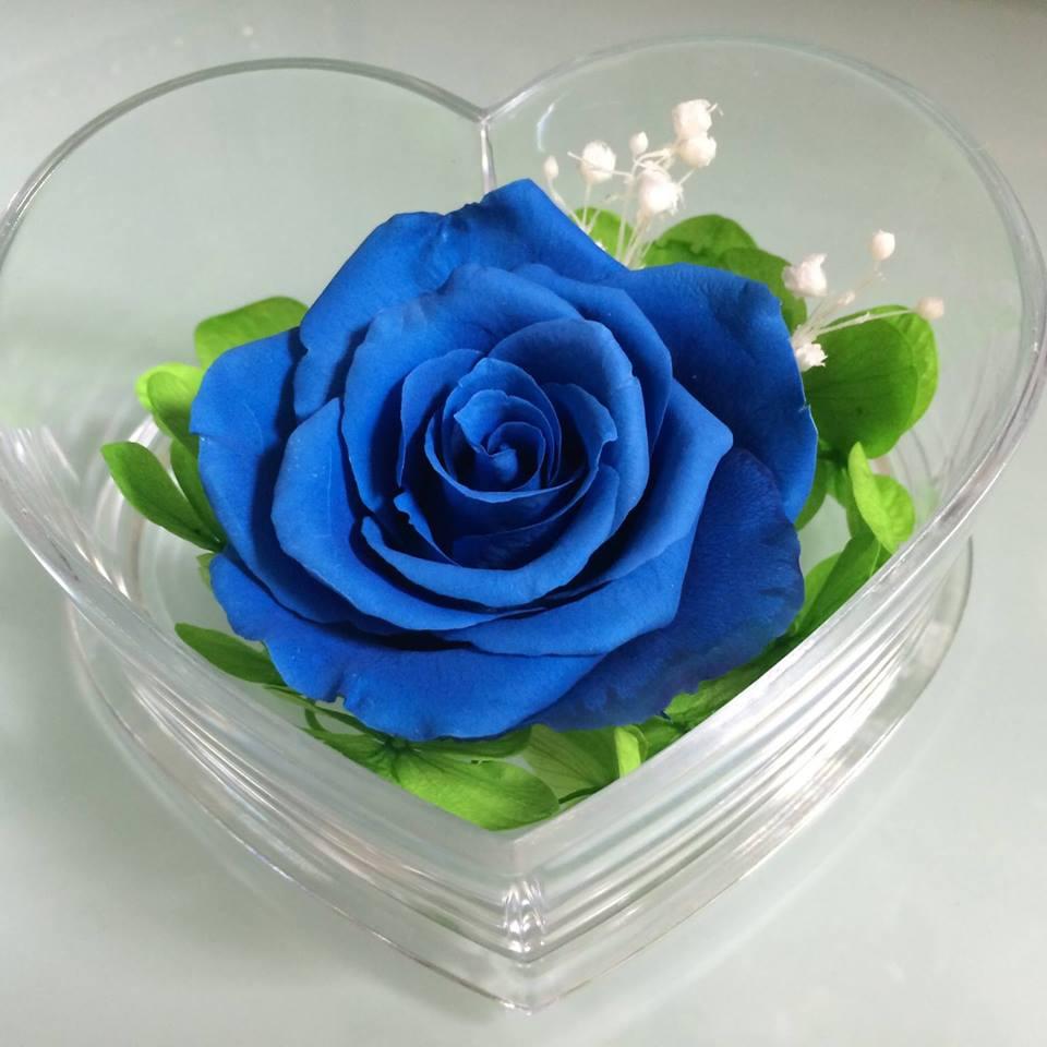 Hoa hồng chính là chúa tể của các loài hoa