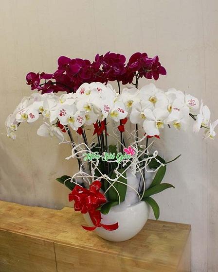 Tìm hiểu món quà là hoa lan đẹp tặng sinh nhật